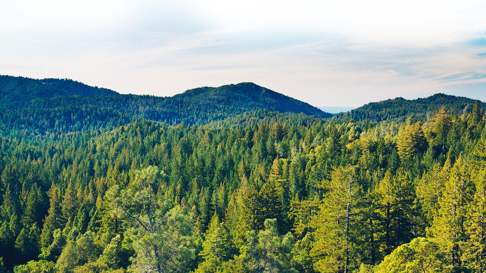 Фонд сохранения биоразнообразия
